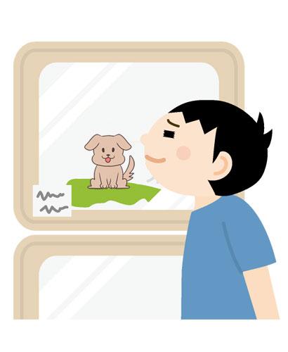ショーウィンドウの中の仔犬を眺める男性のイラスト